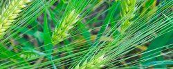 cereals-banner2-760